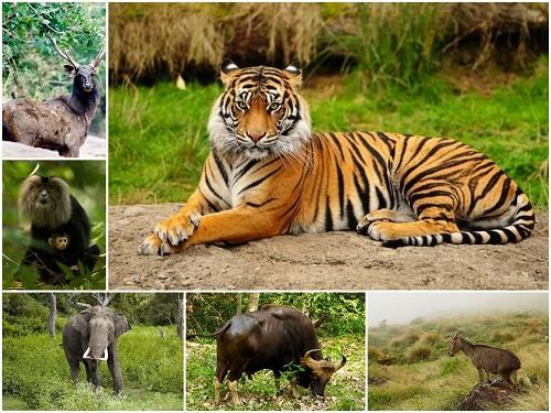 best jungle safari in india