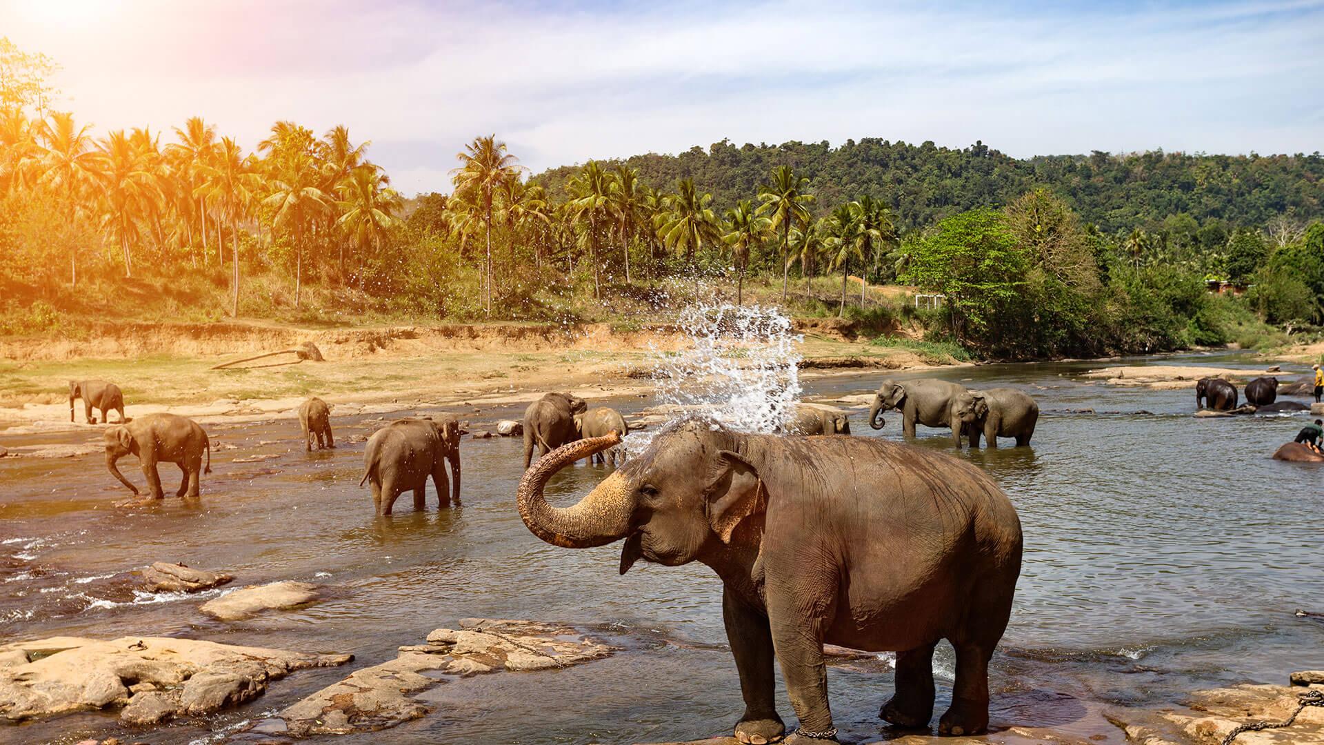 Image result for Sri Lanka hd