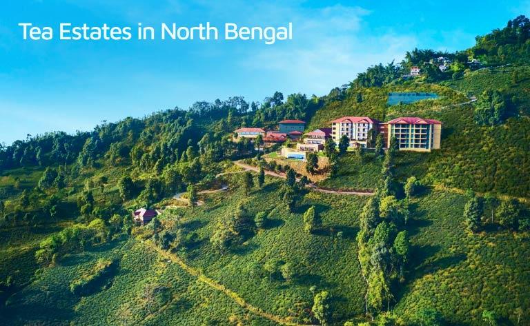 Tea Gardens in North Bengal